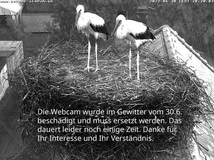 Bern: Storchennest