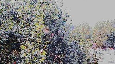 Vue webcam de jour à partir de Steinau an der Straße: Steinau an der Strasse − Amusement Park