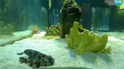 Webcam Pula: Aquarium − Fort Verudela