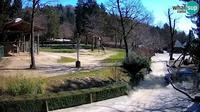 Ljubljana: Webcam Zoo - Giraffes - Overdag