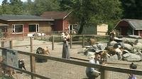 Vancouver: Maplewood Farm - Dagtid