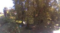 Ferrara: Botanical Garden - Current