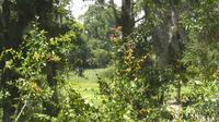 Bluffton: Palmetto Bluff - Recent