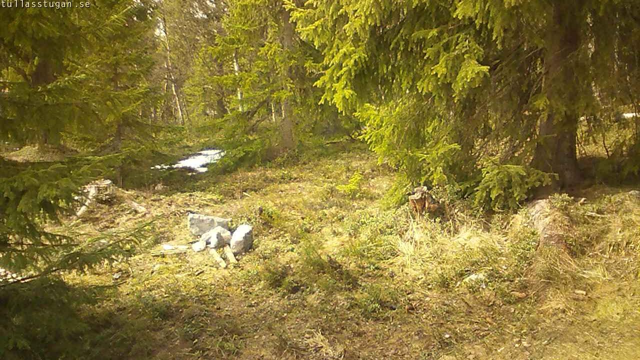 Webcam Mässlingen › North-East: Natur och snödjup