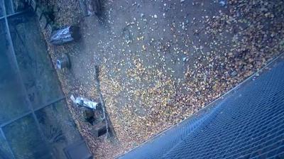 Vue webcam de jour à partir de Tallinn: Zoo Amur leopard stream camera