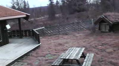 Tageslicht webcam ansicht von Ringebu: Kvitberget Hyttegrend