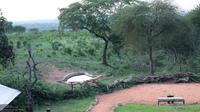 Bonga: Tarangire Treetops - Recent