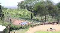 Bonga: Tarangire Treetops - Overdag