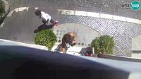 Municipio Roma I: Rome - Navona square - Neptun Fountain - - What's up s - Dia