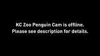 Kansas City: Kansas City Zoo - Current