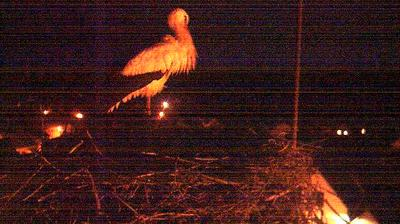 Thumbnail of Ruelzheim webcam at 5:02, Jan 26