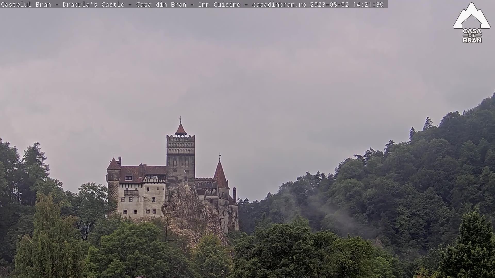 Live Castelul Bran