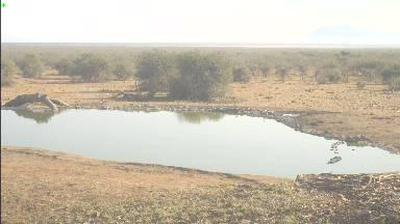 Webcam Madikwe