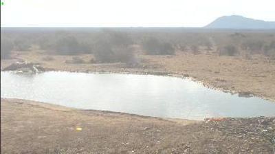 Webkamera Madikwe