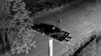 Halifax: Osprey Cam - Actuales