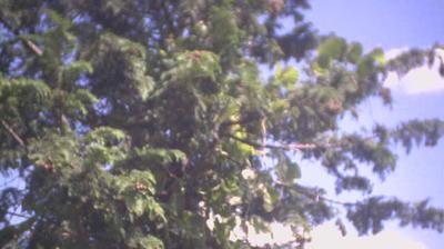 Vue webcam de jour à partir de 熱海: 丹那お天気カメラ