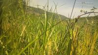 Freienstein-Teufen > West: Weingut Schwarz - Day time