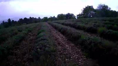 Sault: Webcam de - Aroma Plantes