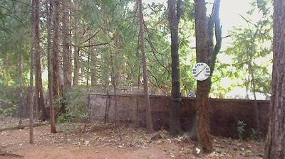 Webkamera Paradise Pines: Magalia