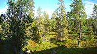 Ruka › East: Northern Ostrobothnia - forest, trees - Actual