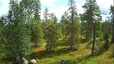 Daylight webcam view from Ruka › East: Northern Ostrobothnia − forest, trees