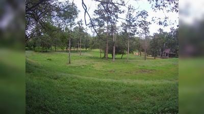 Daylight webcam view from Wang Nam Khiao: Huai Kha Khaeng Wildlife Sanctuary
