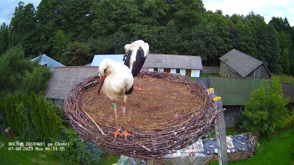 Webkamera Zastawki: Storks, Chodel