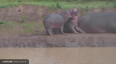 Webcam Kirichu: Mpala Research Center and Wildlife Founda