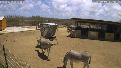 Vue webcam de jour à partir de Dorp Tera Kora: Donkey Sanctuary