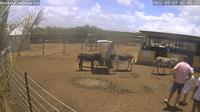 Bonaire: Donkey Sanctuary - Overdag