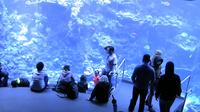 San Francisco: Academy of Sciences - Philippine Coral Reef - USA - Day time