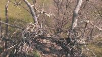 Ridgeway: Decorah Eagles - Overdag