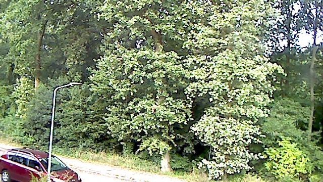 Webcam Hilversum: Zeverijn Park − Webcam