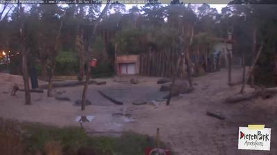 Webcam Bunt: DierenPark Amersfoort