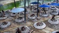 Edinburgh: Edinburgh Zoo - Current