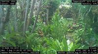 Nakhon Ratchasima: Korat Web Cam - Overdag