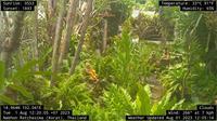 Nakhon Ratchasima: Korat Web Cam - Dagtid