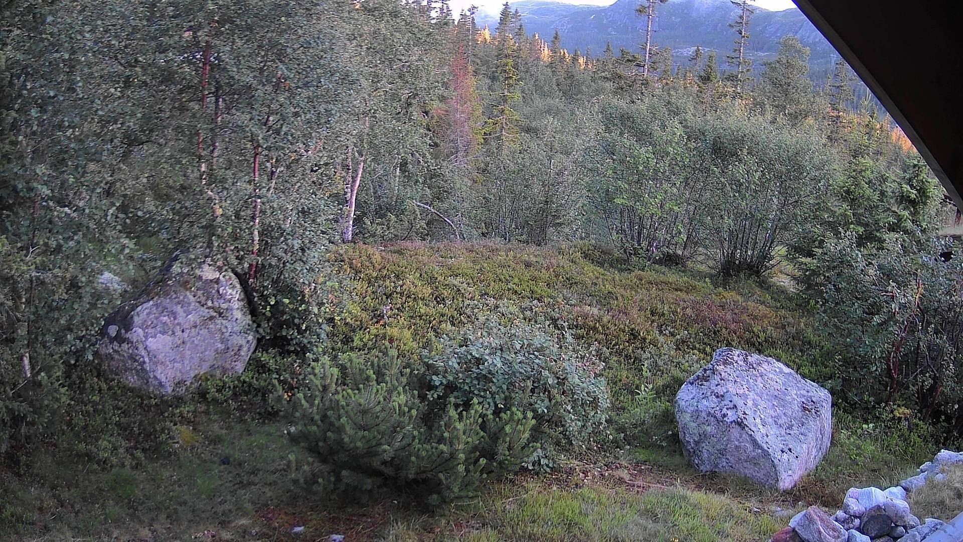 Webkamera Flå: Damtjernhallin