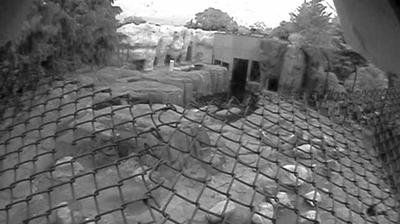 Webcam Eagle Point Colony: Toledo Zoo