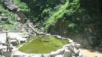 Yamanouchi: Japanese Macaque (snow monkey) in hot spring at Jigokudani Monkey park in - Jour