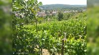 Feuerbach: Lemberg - Dia