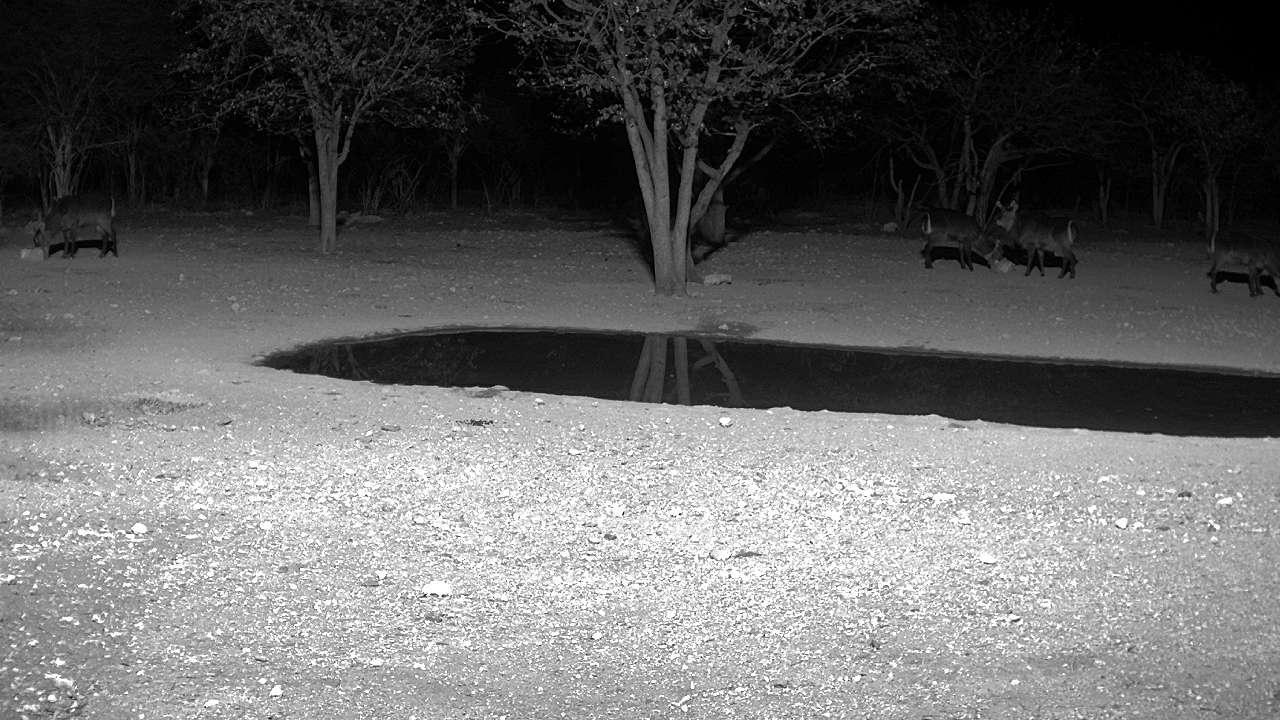 Webkamera Outjo: Sophienhof Lodge Waterhole