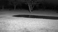 Outjo: Sophienhof Lodge Waterhole - Recent