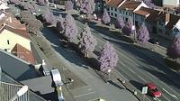 Stare Mesto - Aktuell