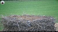 Hedeper: Storchennest - Overdag