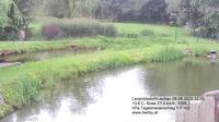 Leopoldsdorf: Fischteich - El día