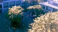 Seattle: Pacific University - Martin Square - Actuales