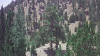 Limassol: Troodos Mountains - Current