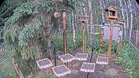 Black Diamond › West: Foothills Birds - Live BirdCam [+ Species - Current