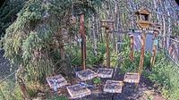 Black Diamond › West: Foothills Birds - Live BirdCam [+ Species - Day time